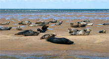 Coastal Tours & Seal Trips in Morston
