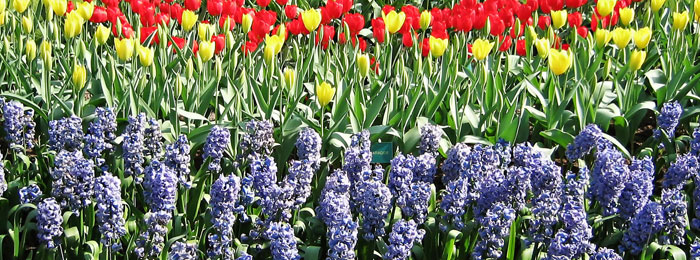 Gardens on the Norfolk Broads