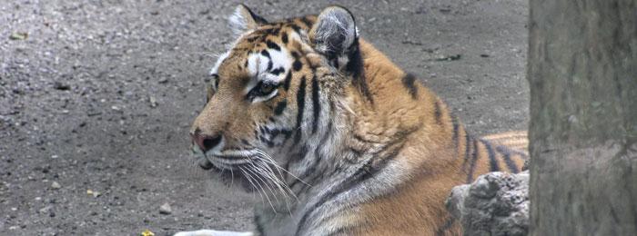 Animals & Wildlife on the Norfolk Broads