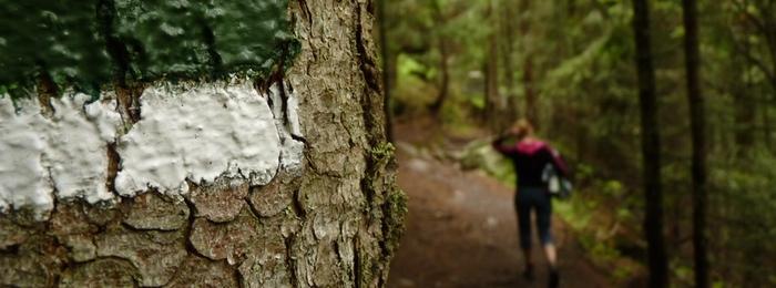 Hiking & Walking on the Norfolk Broads