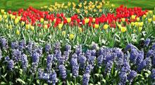 Gardens in North Norfolk