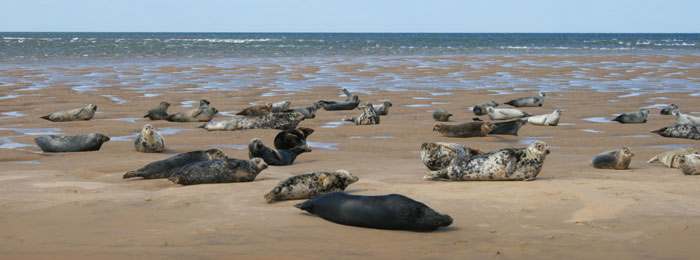Coastal Tours & Seal Trips in Suffolk