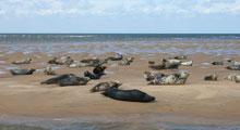 Coastal Tours & Seal Trips in Suffolk