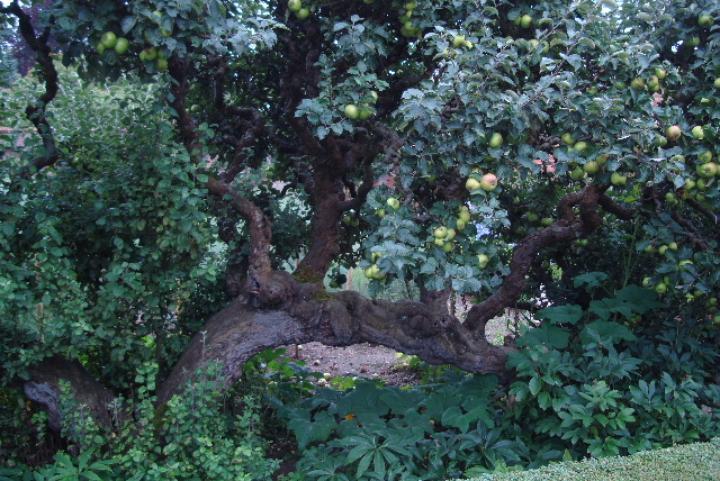The Taste of Autumn - Raveningham Gardens