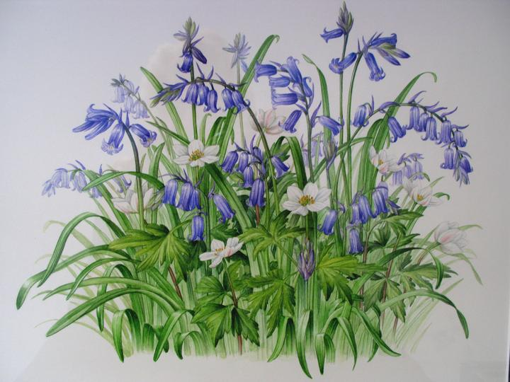 Botanical illustration- Spring flowers