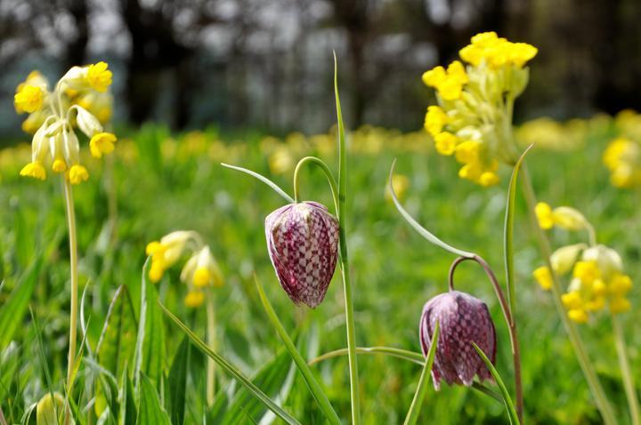 Raveningham Gardens Spring Flowers Week
