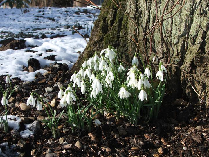Signs of Spring Week