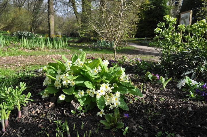Mothering Sunday Guided Walk