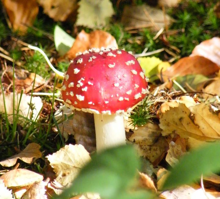 Fungi Photography Workshop