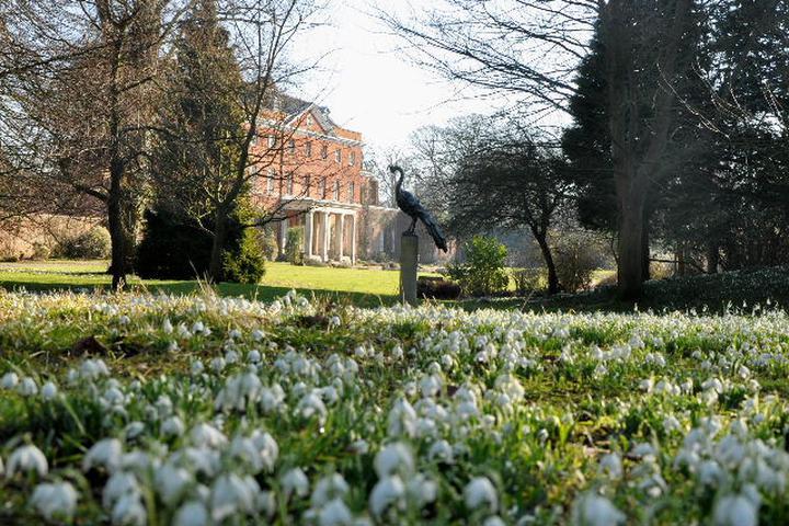 Raveningham Gardens Snowdrop Tours