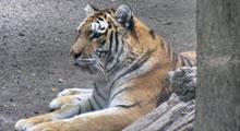 Animals & Wildlife in Suffolk