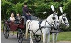 Alde Driving - Horse Drawn Carriages