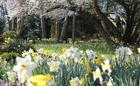Old Rectory gardens in spring