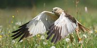 Birds For Beginners at Minsmere