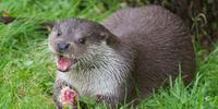 Otter Tracking at Minsmere